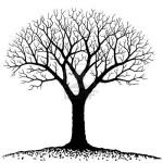 дерево мощное