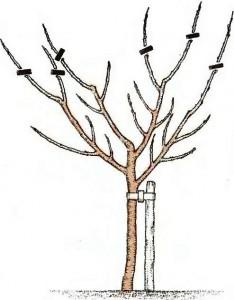 дерево слабое